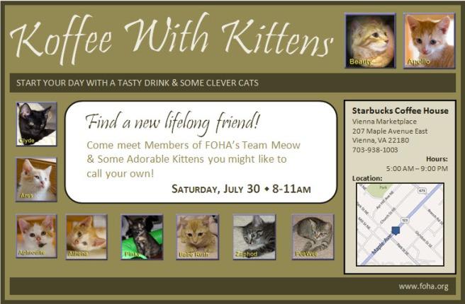 FOHA's Koffee With Kittens Event at Starbucks, Vienna, VA