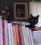 Pumpkin Cat, Our Kitchen Helper