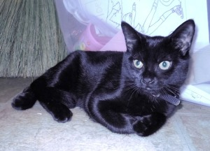 Pumpkin Cat, July 25, 2011