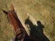 Horsey & Me