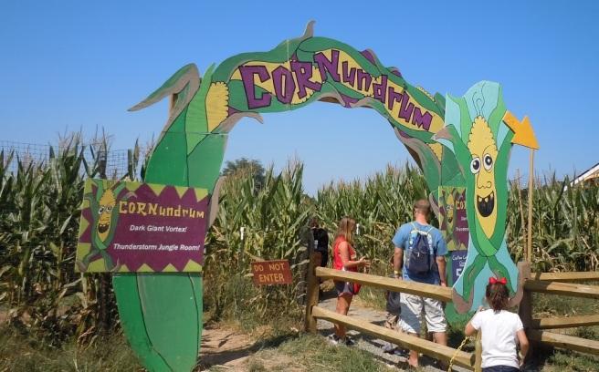 Cornundrum Corn Maze