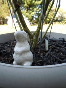 Bunny in a Pot