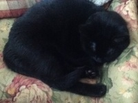 Kitty Curled Up2