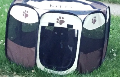 Kitty in the Garden