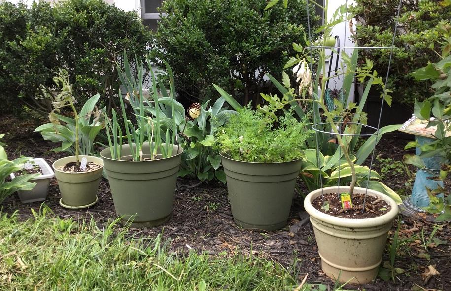 My Garden - 7.4.16
