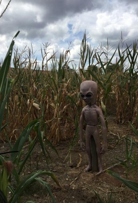 Festival - Alien!