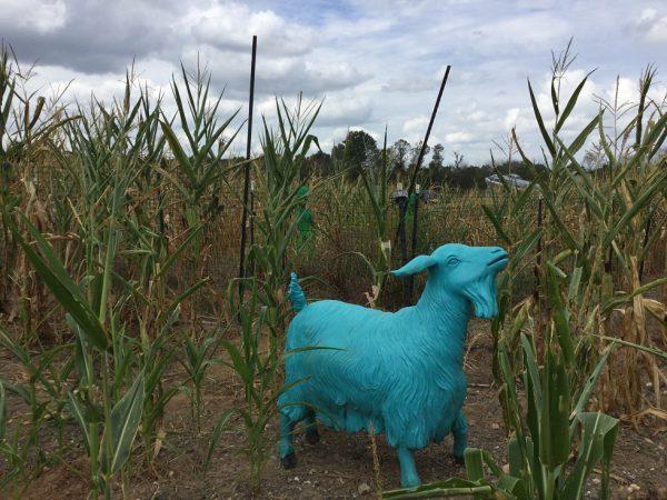 Festival - Capricorny Goat