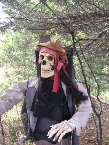 Festival - -Friendly Pirate